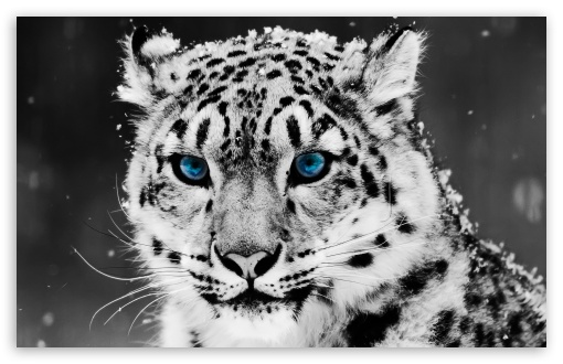 black and white wallpaper hd. wallpaper hd black and white. 10 Snow Leopard - Black And; 10 Snow Leopard - Black And. lessthandmb. Sep 15, 05:27 PM